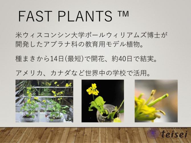 スライド11-0202001.JPG