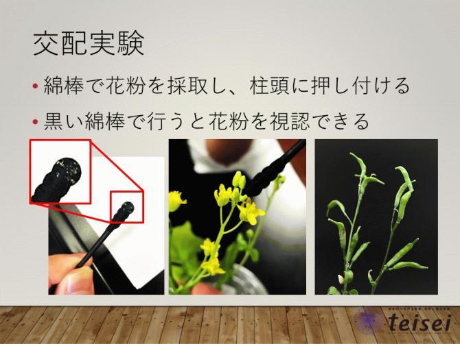スライド20-0202001.JPG