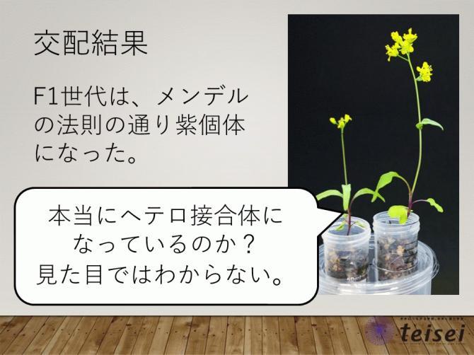 スライド21-0202001.JPG