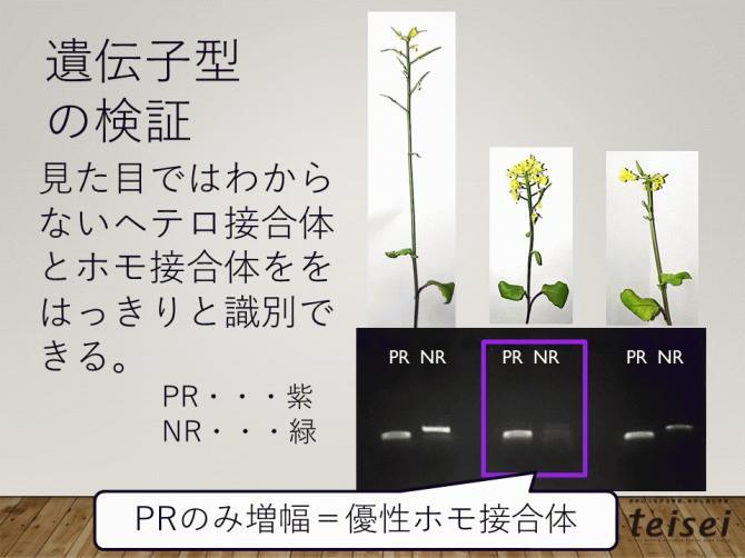 スライド31-0202001.JPG